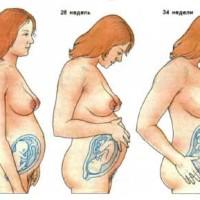 Развитие ребенка в животе у мамы