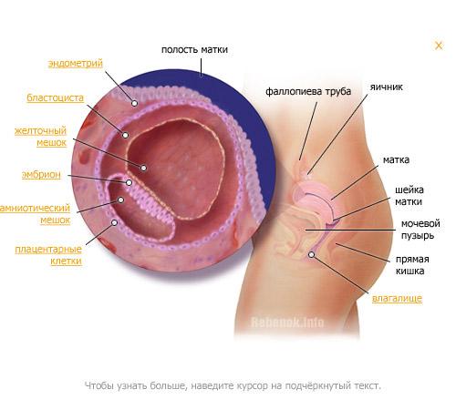 Женский организм