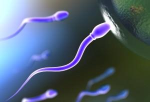 Сперматозоид и яйцеклетка
